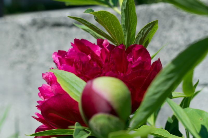 Blurred Background Photography in Reverse - Frontal blur flowers