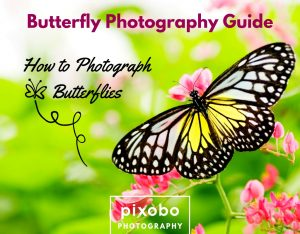 Butterfly Photography Guide-How To Photograph Butterflies
