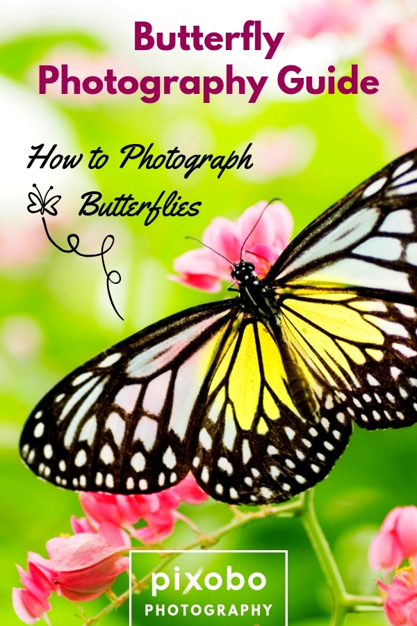 Butterfly Photography Guide: How to Photograph Butterflies