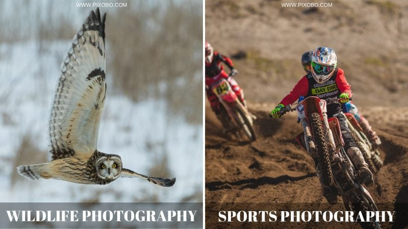 Wildlife and Sports Photography