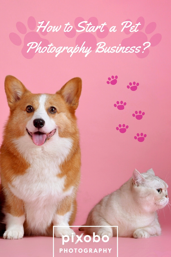 How to Start a Pet Photography Business?