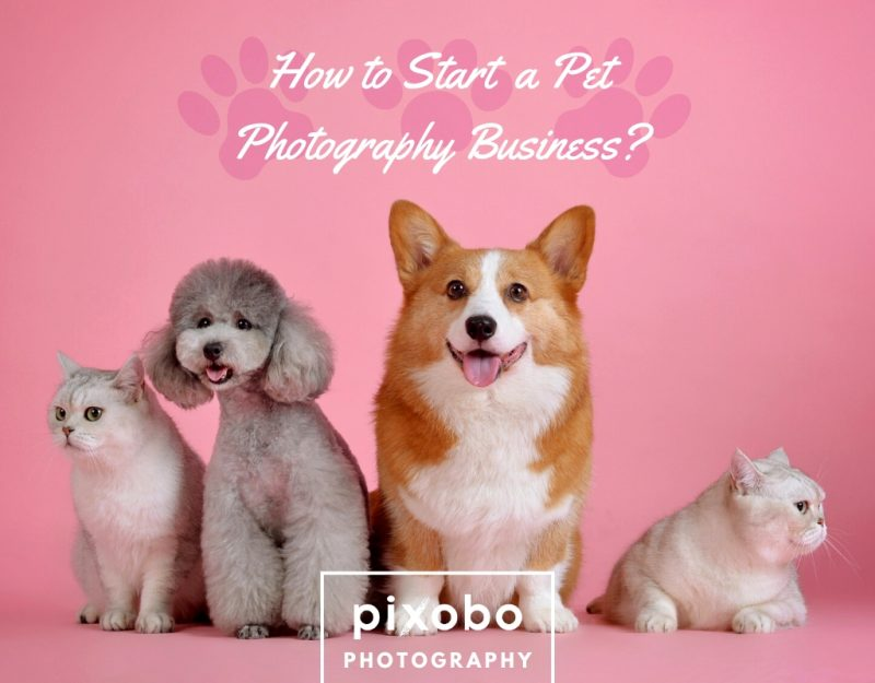 How to Start a Pet Photography Business_