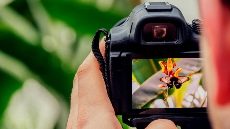 Must Have Equipment for Perfect Butterfly Photos