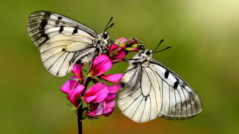 Right Time of The Day to Shoot Butterflies